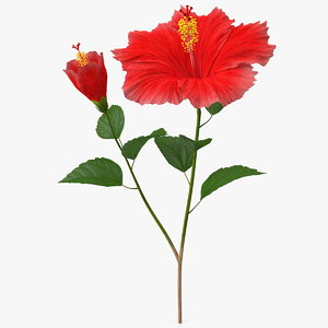 3D hibiscus branch flower red