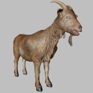 3D goat animal model