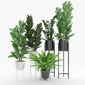 3D ficus bush
