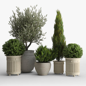 3D model thuja bush tree