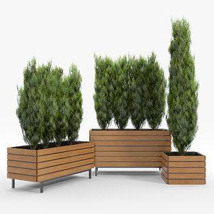 thuja tree flowerpot 3D model