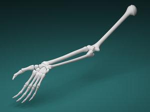 3D arm skeleton