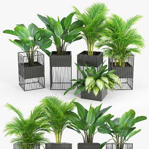 tree flowerpot indoor 3D model