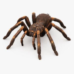 realistic tarantula animations rig 3D