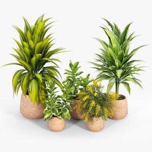 bush flowerpot indoor 3D model