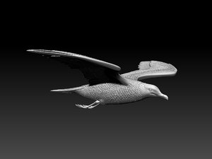 3D seagull sea gull