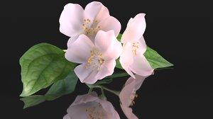 flower pink 3D