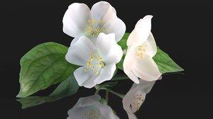 3D jasmine flower bouquet tea