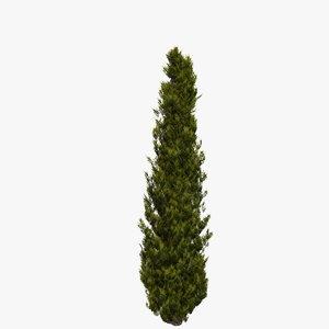 3D italian cypress