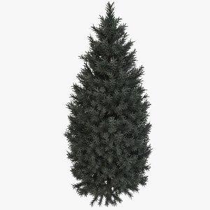 3d italian cypress trees 3 model