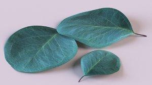 eucalyptus tree leaf plant 3D model