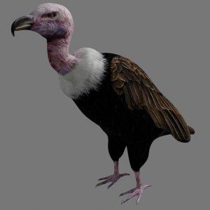 vulture bird rigged 3D model