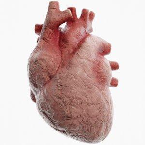 3D modeled clay heart model