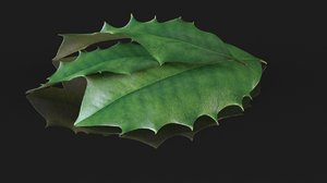 leaf holly christmas plant 3D