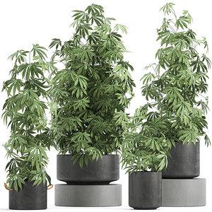 plant flowerpots cannabis 3D model