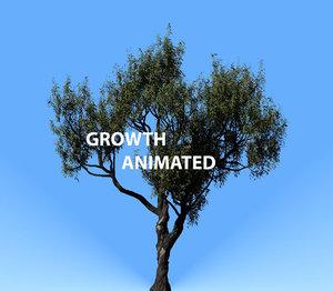 3D american chestnut tree 001