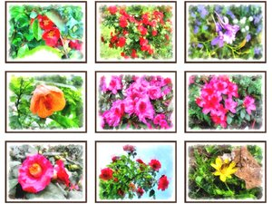 pictures flowers 3D model