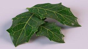 holly leaf plant nature 3D model