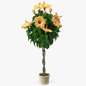 triple twist braided hibiscus 3D model