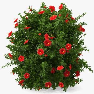 flowering hibiscus bush red 3D model