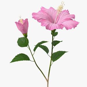 3D flowering hibiscus stem pink