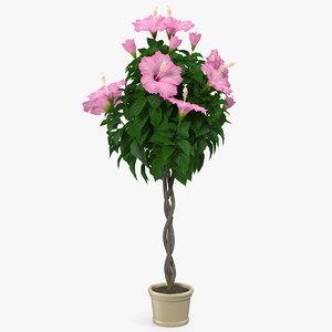 3D braided hibiscus tree pot model