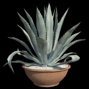 agave american blue 3D model