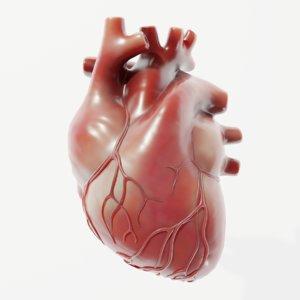 3D modeled human heart