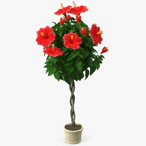3D model braided hibiscus plant red