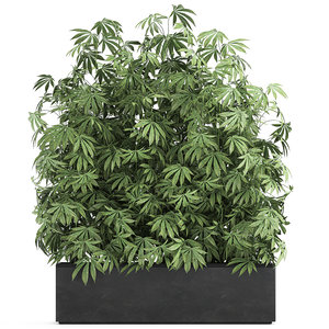 3D plant flowerpots cannabis