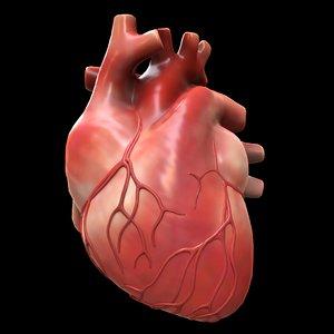 modeled human heart model
