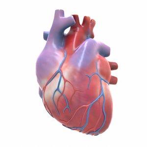 3D modeled human heart model