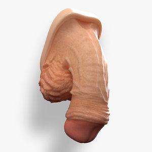 Male Genital Organ