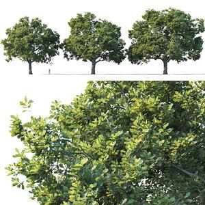 3D oak trees