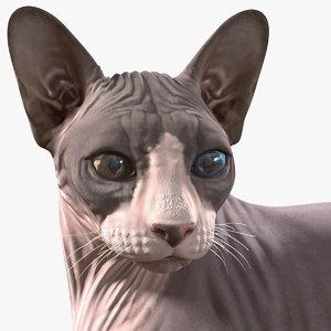 3D sphynx cat heterochromia rigged