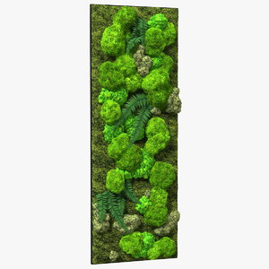 natural moss wall preserved 3D