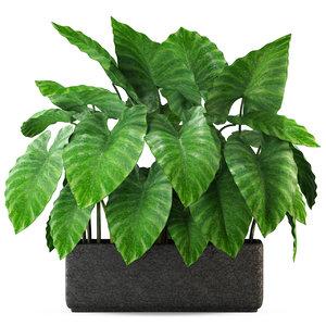 plants 294 3D model