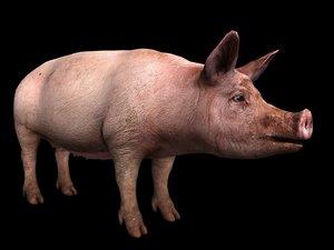 pig 3D