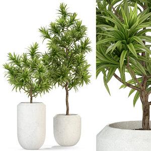 3D dracaena plant