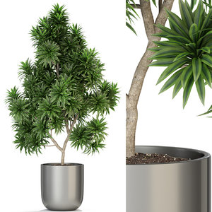 plants 306 3D model
