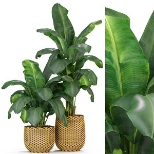 3D model plants 311