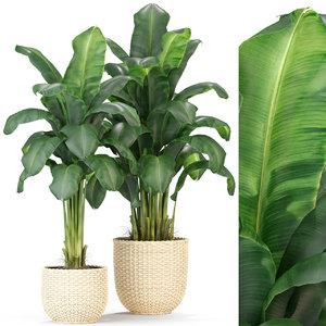 plants 312 3D model