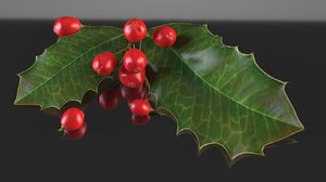 leaf holly plant nature 3D