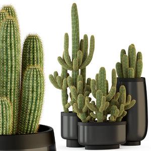 3D plants 317