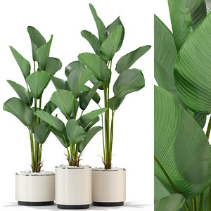 3D plants 323 model