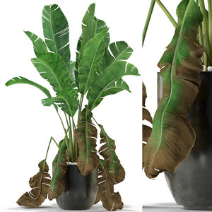plants 326 3D model