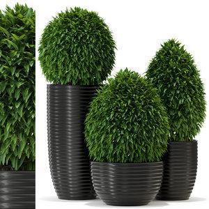 3D plants 329