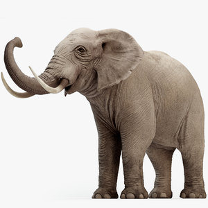 rigged elephant 3D