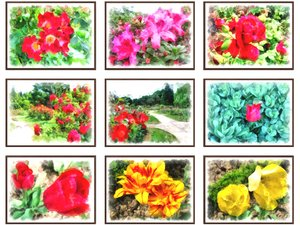 3D pictures flowers