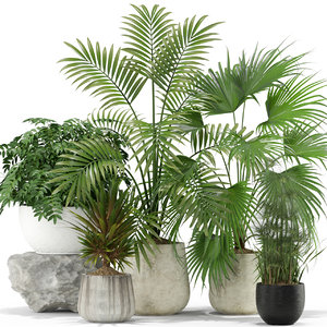 plants 353 3D model